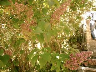 bookworm_sangimignanoflowers