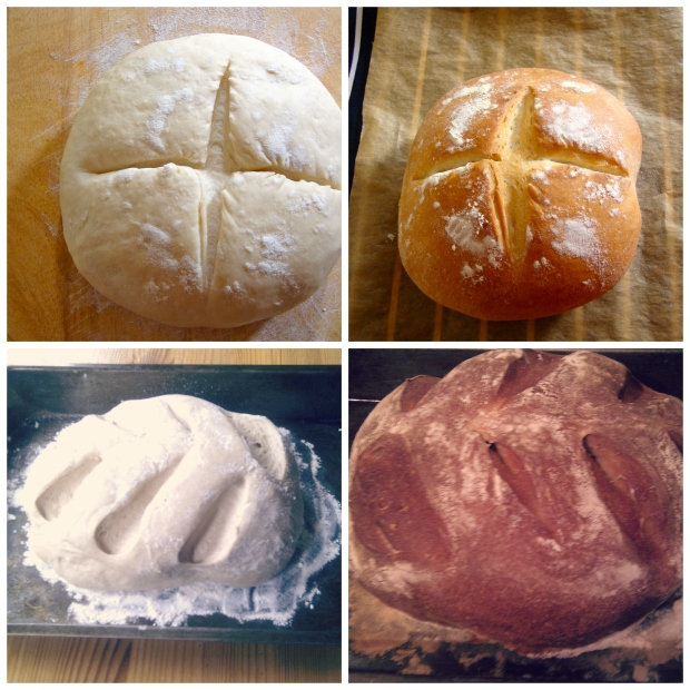 Top row: White bread by Joy the BakerBotom row: Rye bread from Wild Yeast