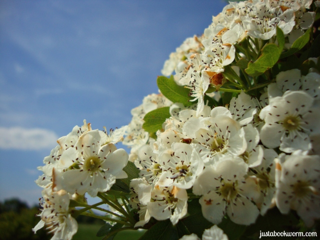 bookworm_blossoms