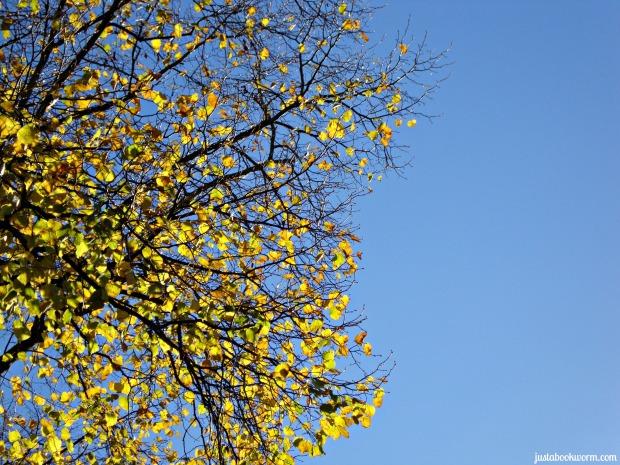 bookworm_autumn10
