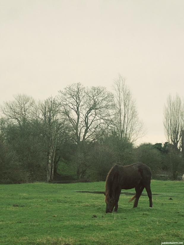 bookworm_horses2