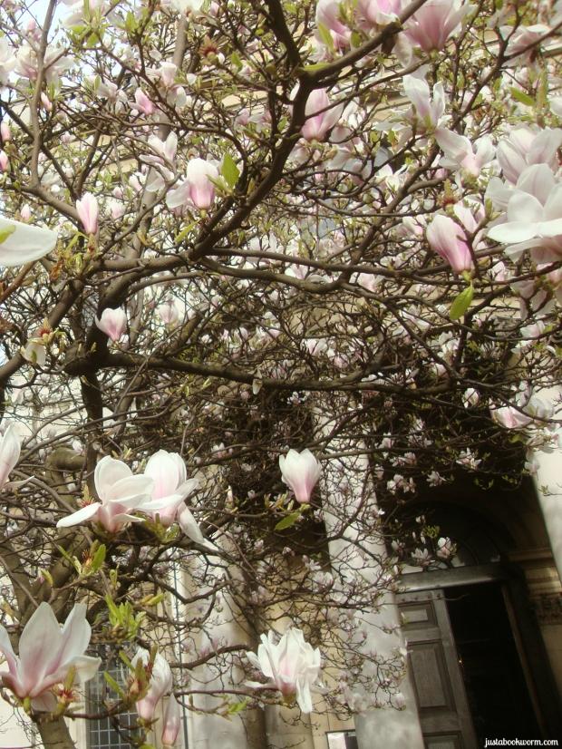 bookworm_magnolias1