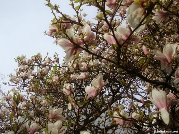 bookworm_magnolias2