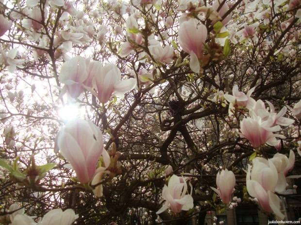 bookworm_magnolias4