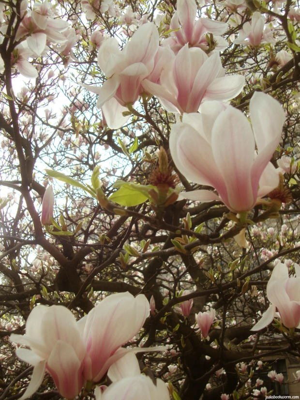 bookworm_magnolias5