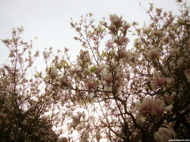 bookworm_magnolias6